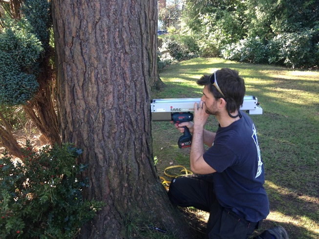 Aerial Decay Detection Drilling Tree Survey surrey Near me Hampshire