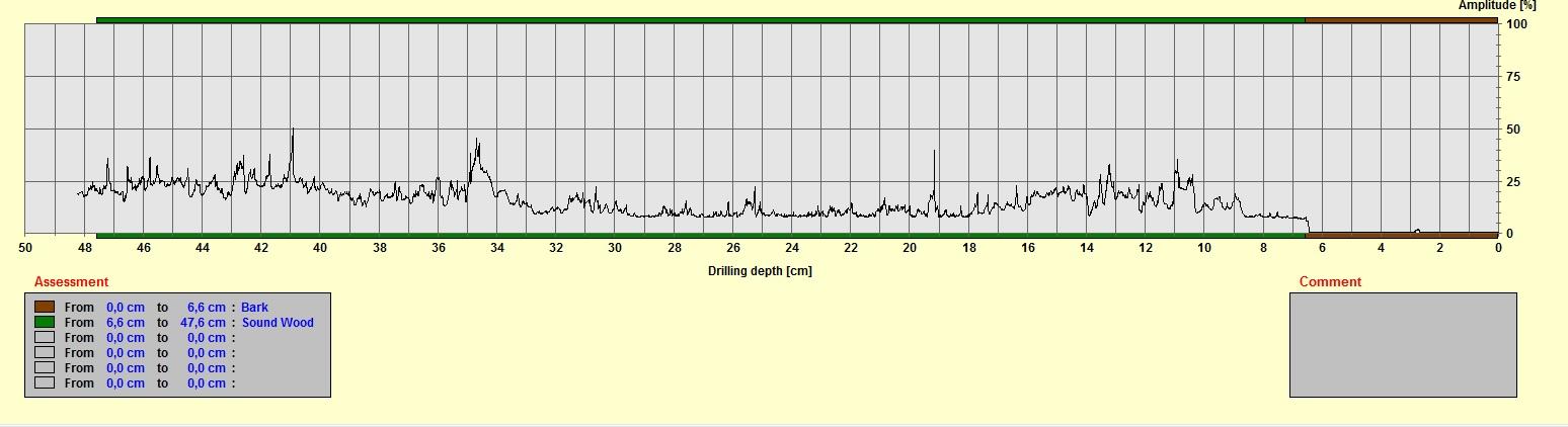 Drilling Graph Tree Survey Inspection Surrey Guildford Woking Weybridge